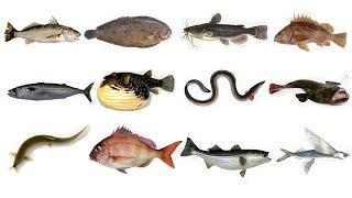 생선 영어단어 30개 l 제철생선 l 생선 칼로리 l …