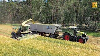 Ganzpflanzensilage (GPS) aus Getreide - Großmaschinen im Einsatz - Häckslerkette mit Krone BigX 630