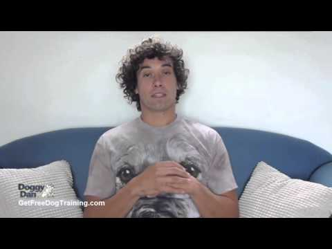 doggy-dan-online-dog-trainer-review---doggy-dan's-dog-training-philosophy