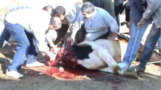 Kurban Kesimi 2012  KKB 11  Sheep slaughter Girl (Selin için çekilmiştir)