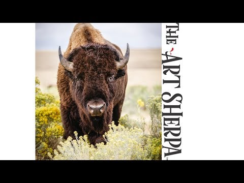 How to paint a Buffalo in Yellow flowers Acrylic Painting Tutorial Southwest Art Week