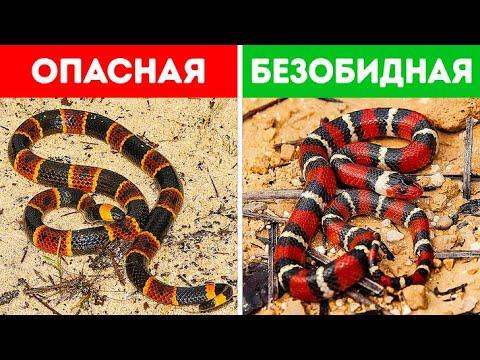 18 опасных змей, на которых при встрече даже смотреть рискованно
