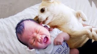 Naughty Baby and Dog moments ★ Funny and Cute Video Compilation