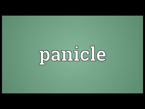 Panicle Meaning