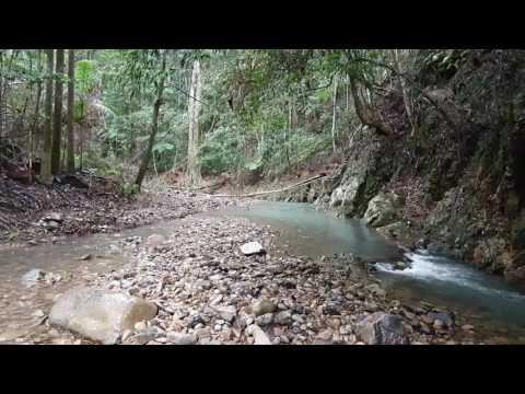Relaxing Sleep Sounds:  Rainy Creek Currumbin Valley Australia
