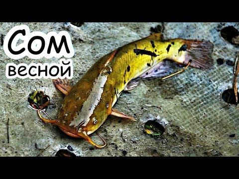 Как ловить сома весной в марте апреле и мае? Толковое обучение ловли сома весной!