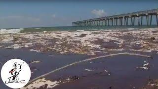 Pretty Slick (BP Oil Disaster Documentary) Official Trailer