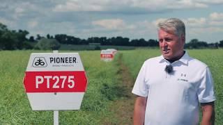 Demo Farma Grodkowice- omówienie odmian PT264, PT275, PT271 rzepaku ozimego marki Pioneer