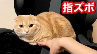 もふもふ猫に指ズボした結果がこちら