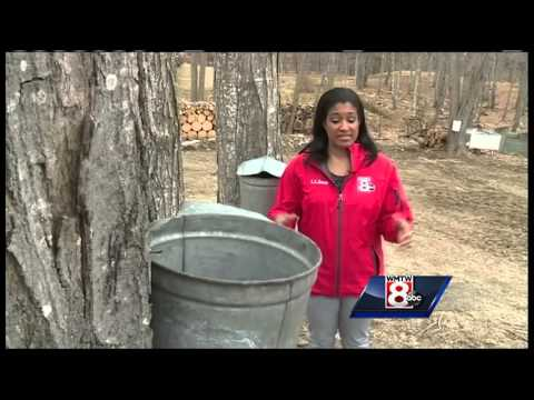Syrup season ends early following a  warm winter