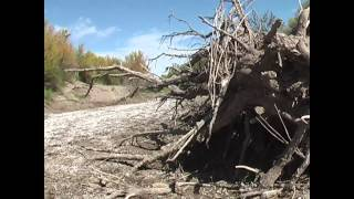 Informe Telam - Río Atuel, Historia de un despojo