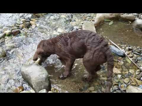 Puppy catches fish