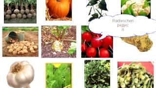 05  Овощи 2