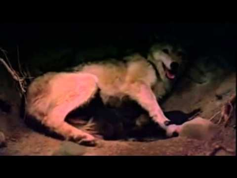 Hélène Grimaud ~ Wolf Moonlight Sonata