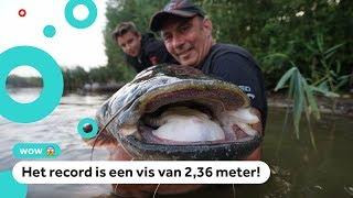 'Monstermeervallen' in Nederland gevangen