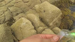 먼바다 외딴섬 해바라기섬 황도의 앞마당 갑오징어낚시