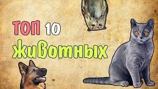 10 самых дорогих домашних животных