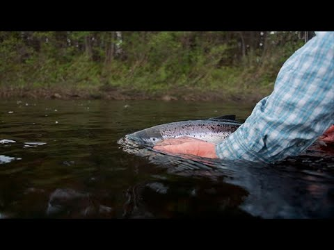 Early Season Atlantic Salmon With Collin Marsden