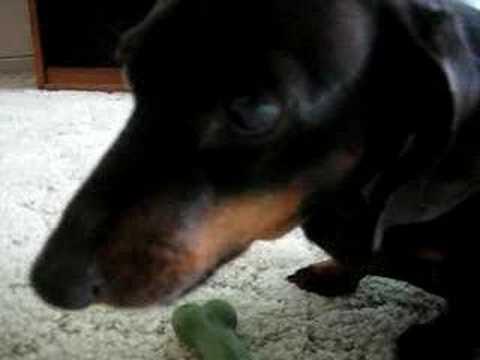 My Evil Weiner Dog