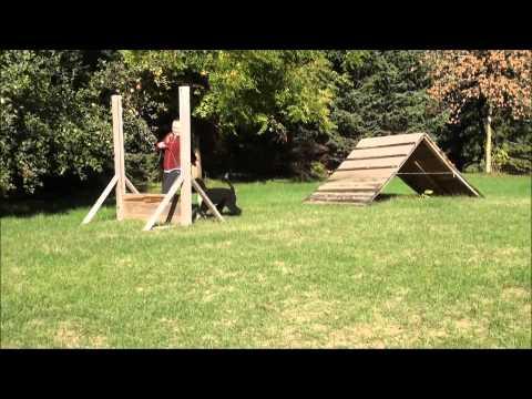Hattie (Portuguese Water Dog) Boot Camp Dog Training Demonstration