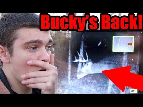 BUCKY'S BACK!!!