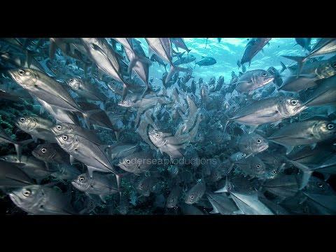 """""""Undersea Realm in 4K"""" underwater nature video stock footage demo reel UltraHD UHD"""