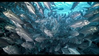 "4K UltraHD underwater nature video stock footage Demo Reel UHD ""Undersea Realm in 4K"""