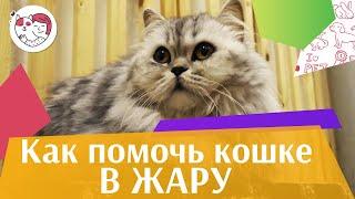Как помочь кошке в жаркую погоду: видеоинструкция на ilikepet