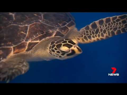 6298d53291 Turtle Hospital - Carmichael Ford - YouTube