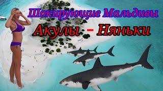 Шокирующие Мальдивы. Акулы няньки.