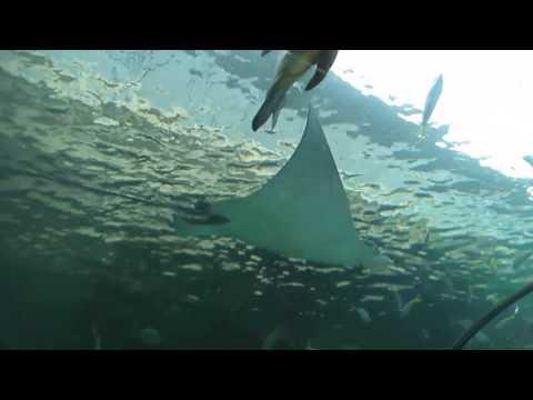 Underwater Tunnels @ The Sea Life Aquarium in Sydney