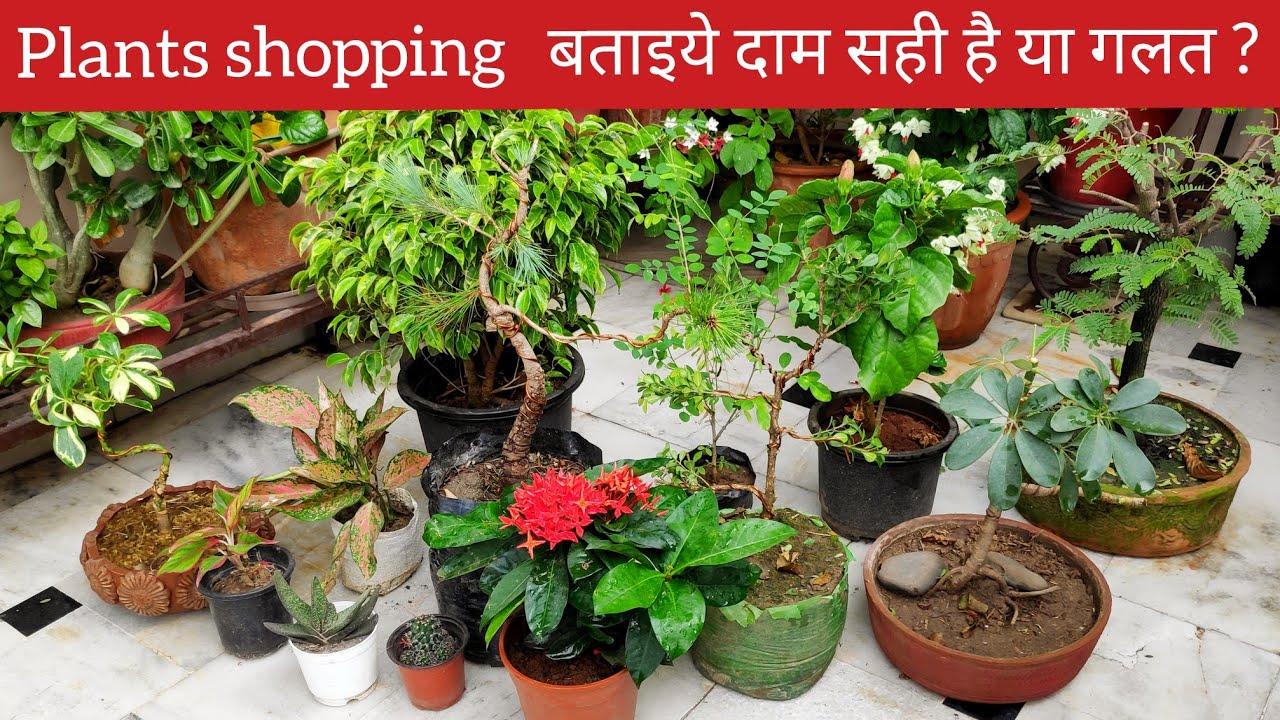 मेरे इन नए पौधों के नाम और दाम, New plants collection, Nursery plants shopping haul names price