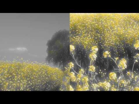 Yusuke Tsutsumi - Fallow Land