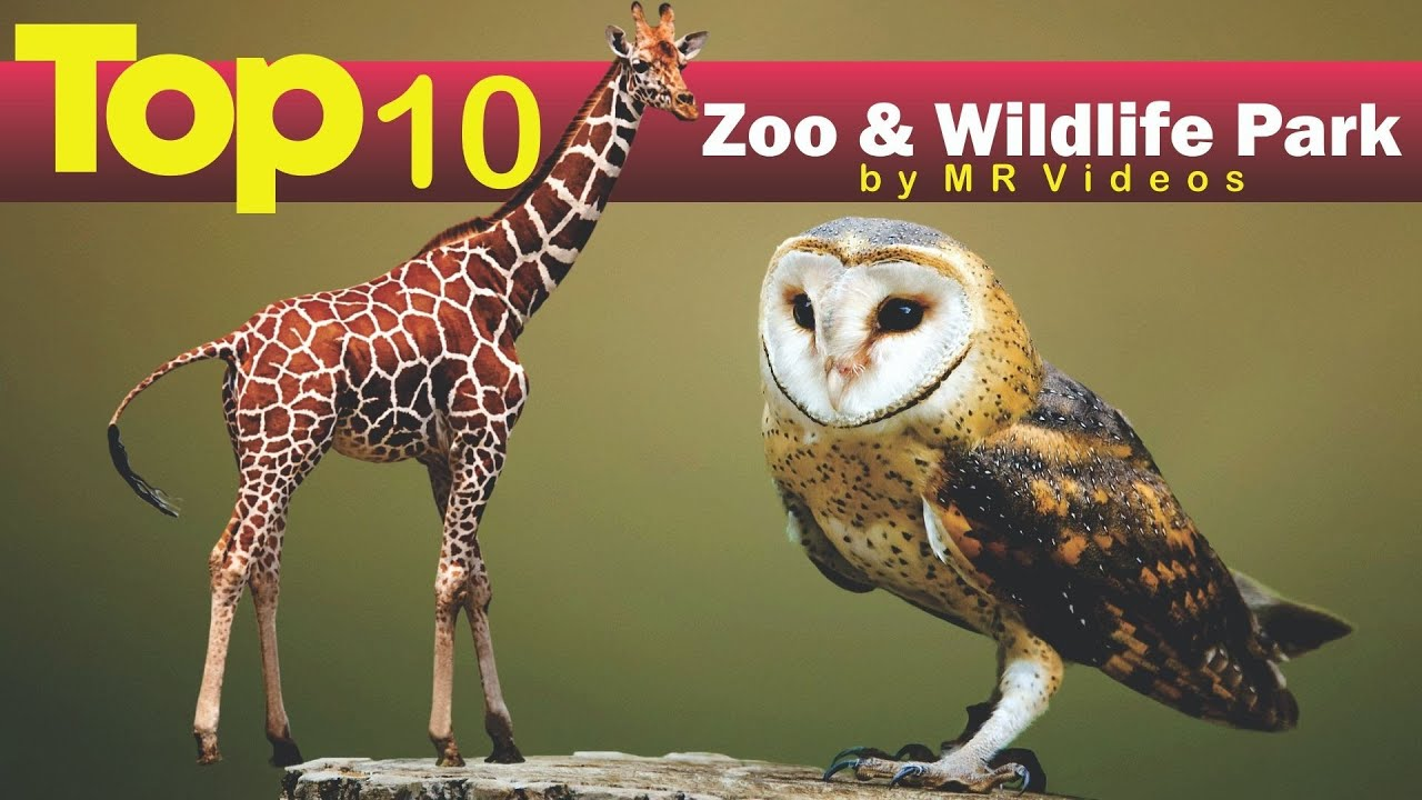 Top 10 Zoos & Wildlife Parks In Arizona, As Featured In The 2020 Edition Of Ranking A