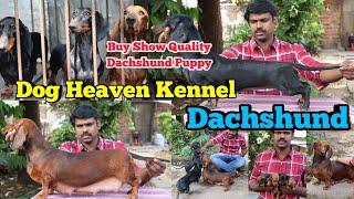 Dachshund Dog ഉല്ലാസേട്ടന്റെ ഡാഷ് ഡോഗ് കെന്നൽ Dogs Malayalam Dogs in Kerala