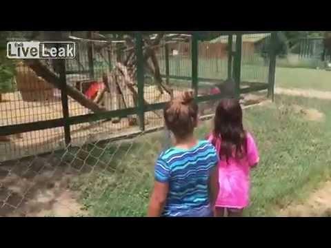 Monkey Throwing Poop Youtube