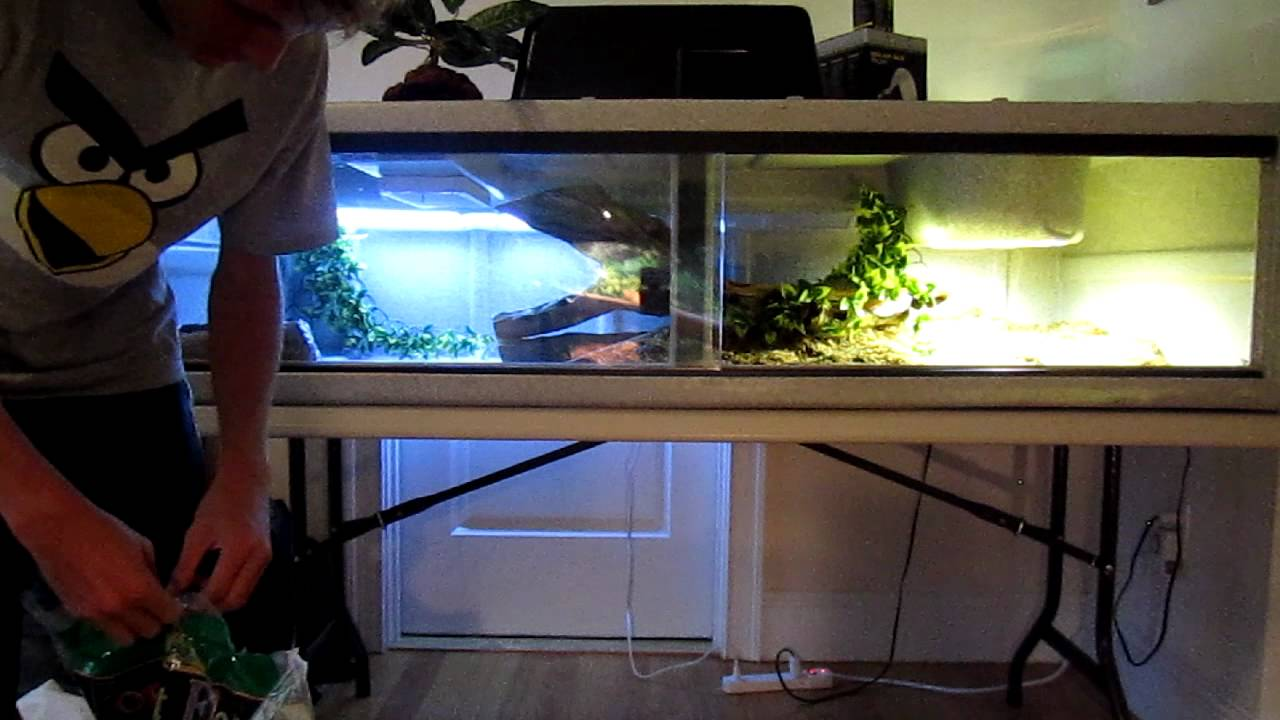 how to build a custom snake enclosure