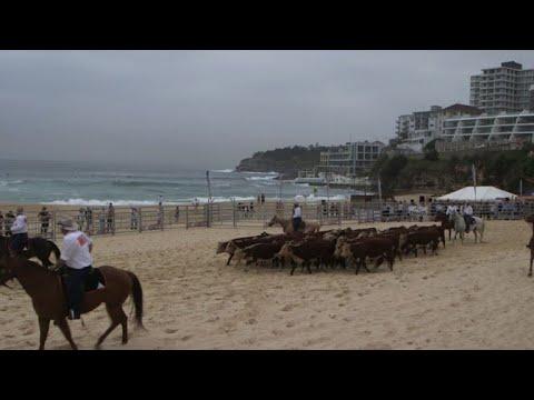Cows throng Bondi Beach for Australia rural health cause
