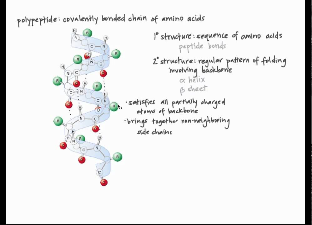 protein structure worksheet adriaticatoursrl. Black Bedroom Furniture Sets. Home Design Ideas