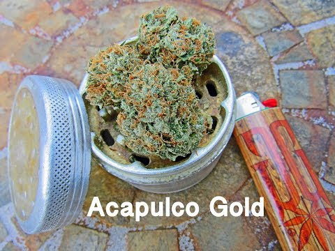Acapulco Gold - Cannabis strain review