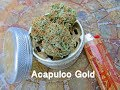 Acapulco Gold - Cannabis Strain Review