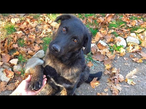 Dog Holds My Hand and Asks Me to Help Him Find a Home