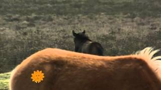 Nature: Horses In England's New Forest