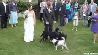 Жестокие падения на свадьбе, это же надо так пить