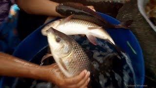 যারা বড় রুই কাতলা মাছ চাষ করতে চান তারা ভিডিওটি মনোযোগ দিয়ে দেখুন
