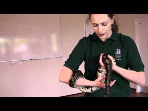 Animal health and husbandry: snake health check
