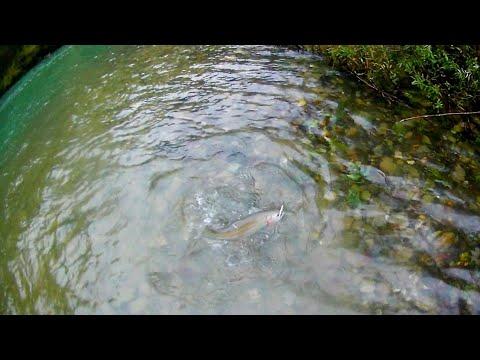 Fishing For Huge Rainbow Trout-Hucno Season 2019