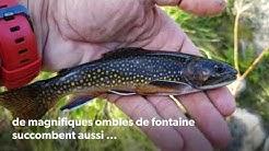 pêche de la truite en lac de haute Ariège 09-2018
