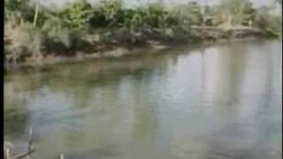 Murky Mekong Fish