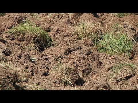 Daños del Jabalí en el Jardín de Montealegre 13 9 19